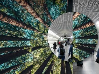 Building a Healthy Planet through Decarbonization