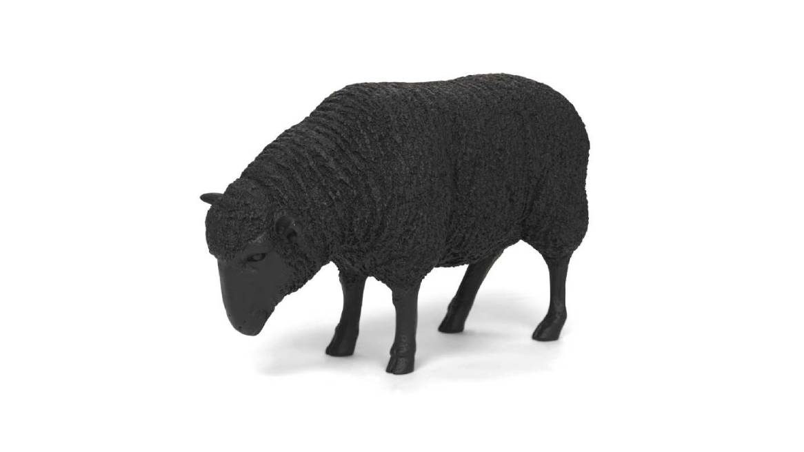 MGBW Black Sheep On White