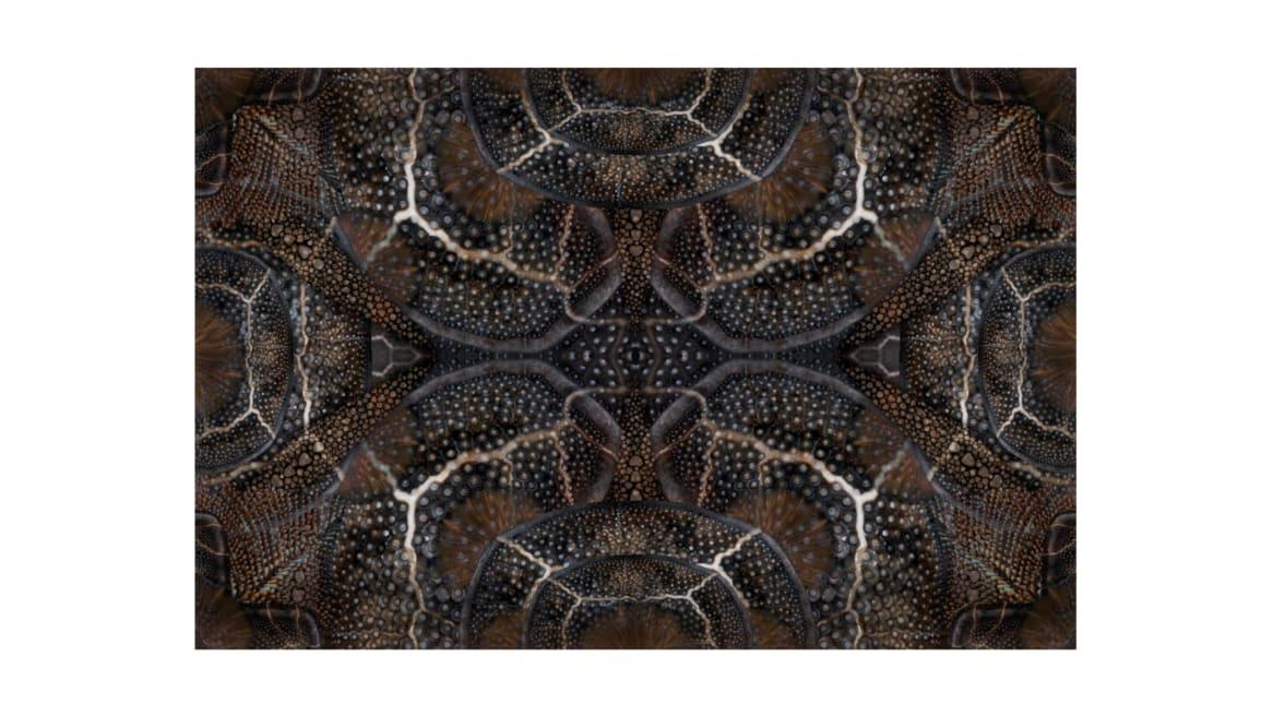 Blooming Seadragon Moooi Carpets On White