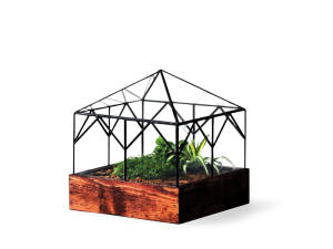 A single LeadHead Glass terrarium with several plants inside