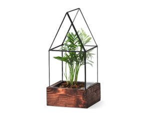A single Lead Head Glass terrarium with a plan inside and wood base