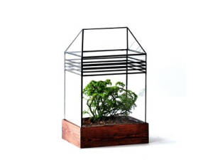LeadHead Glass terrarium with horizontal lines and a bonsai inside.