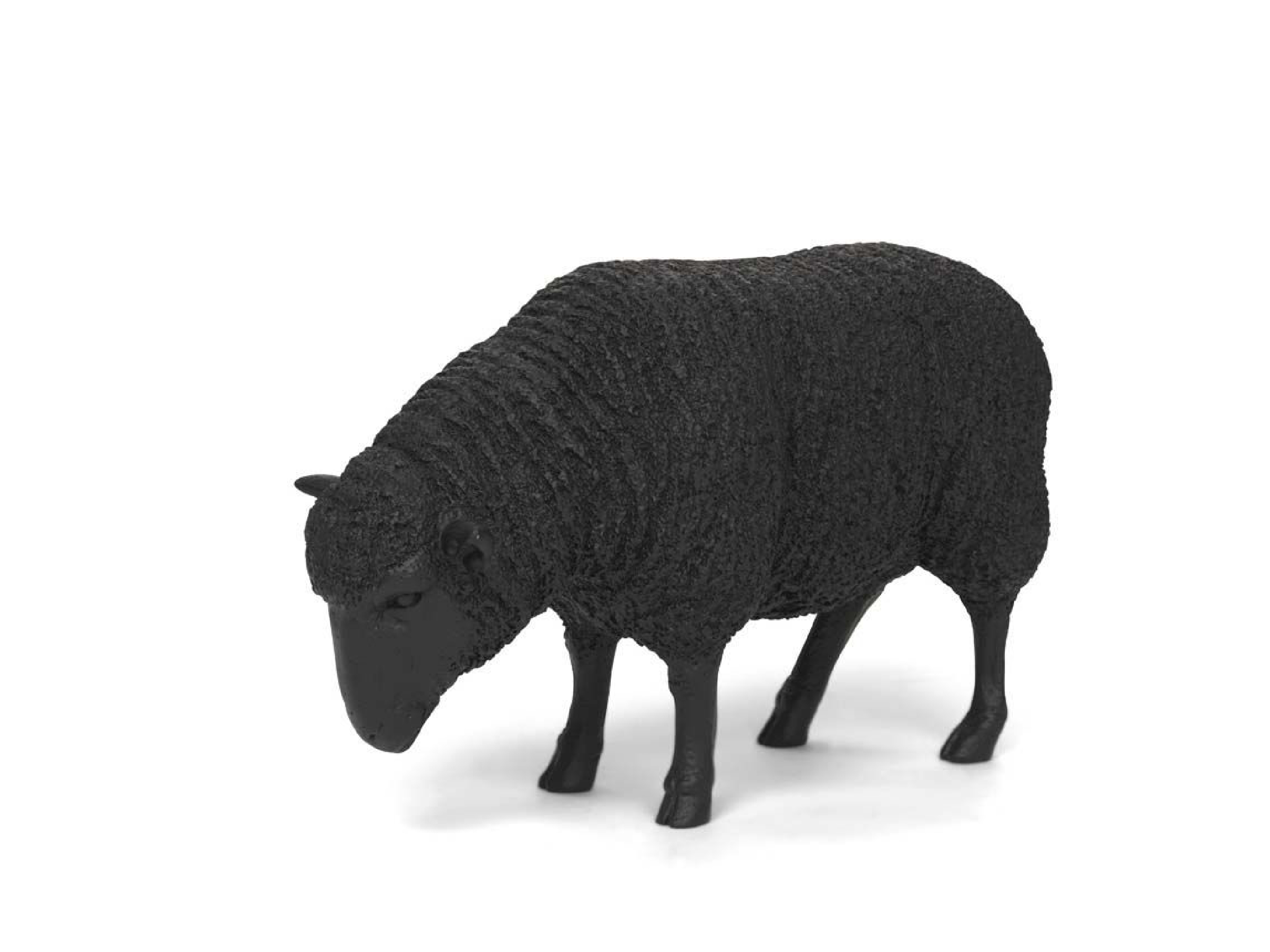 Black Sheep Steelcase